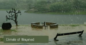 Best Time to Visit Wayanad and Its Climate